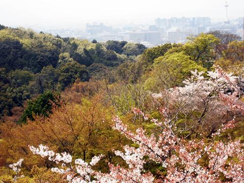 遠くに京都タワーが!